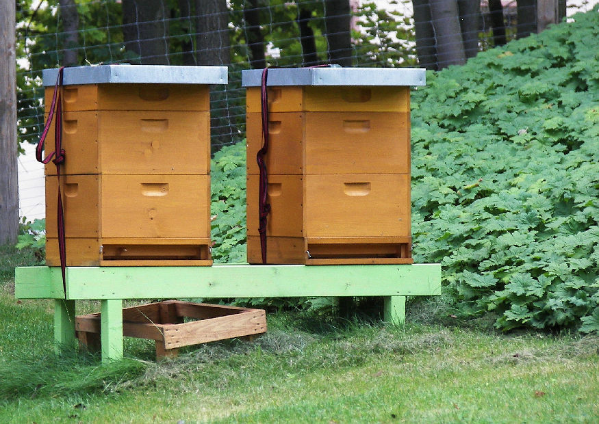 bienenkisten ideale bienenstock im garten hobby und. Black Bedroom Furniture Sets. Home Design Ideas